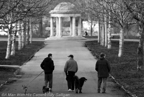 Day 48 Dog Walkers