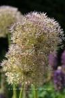 Fauna and Flora (11)