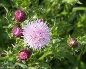 Fauna and Flora (13)