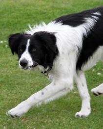 Lassie in Park (8)