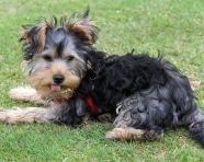 Pippa in Park (2)