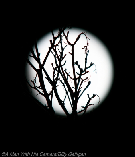 Moon and Tree Jan 2014 Small